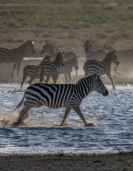 Tanzania_Feb_2018-337.jpg
