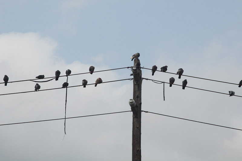 Pigeons and a Pole