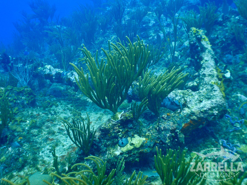 """""""200 Years at the Bottom of the Ocean"""" (Proselyte Wreck, St. Maarten)"""