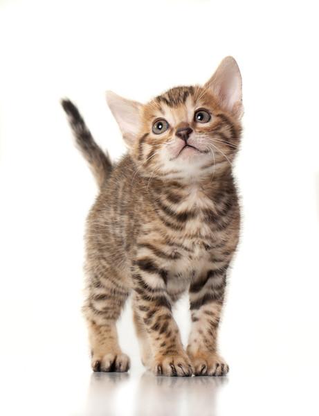 Kittens-227-Edit.jpg