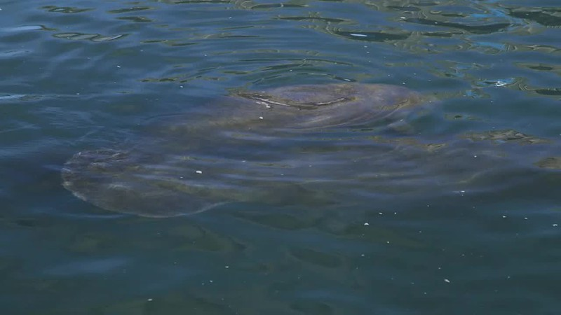 20170131_WPB_fpl_manatee_discovery_center_jrf.mp4
