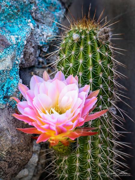 ASDM Flowers 4-25-2019d-.jpg