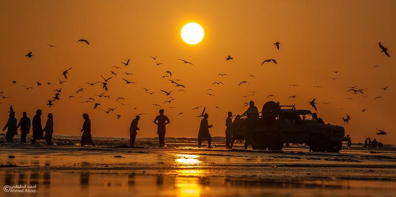 Sardeen season -Oman (46).jpg