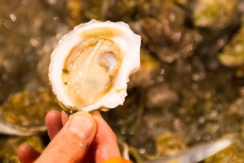 oysterfest-7774.jpg