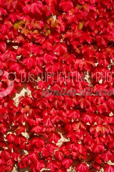 Red Leaves_batch_batch.jpg