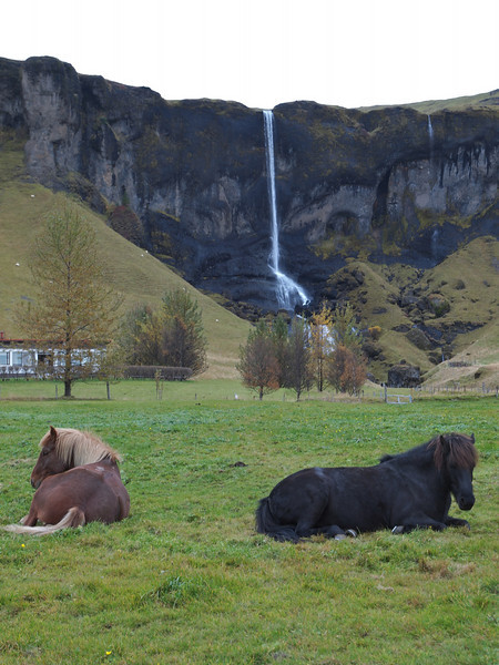 Passing another waterfall, somewhere in south Iceland. A couple of sleepy icelandic horses made the shot.