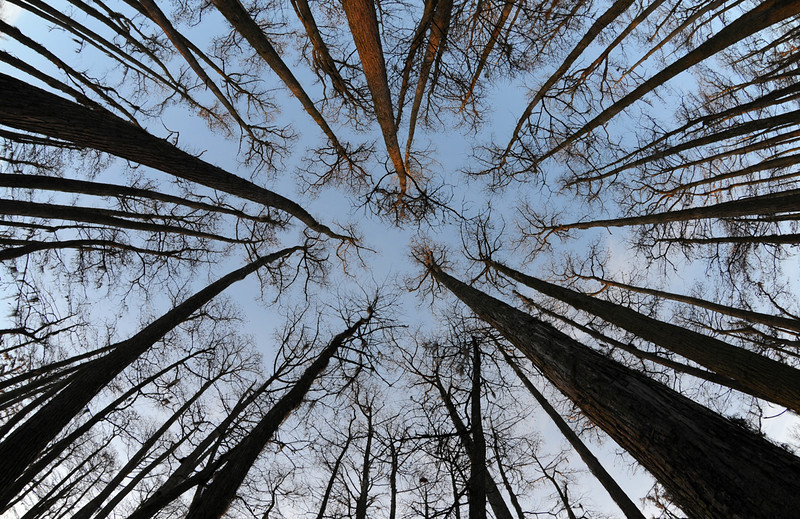 Cypress Swamp .jpg