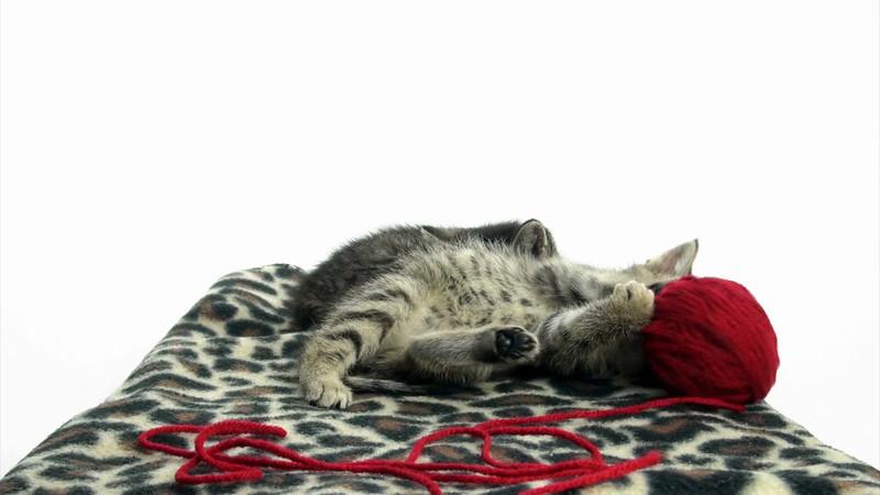 Kittens_tabby_006.mov