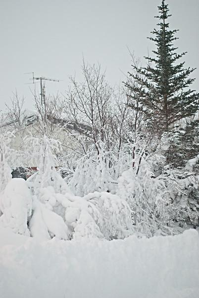 2012-12-30 14-06-46_DSC_2406.jpg
