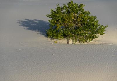 White Sands National Monument - Sept 2019