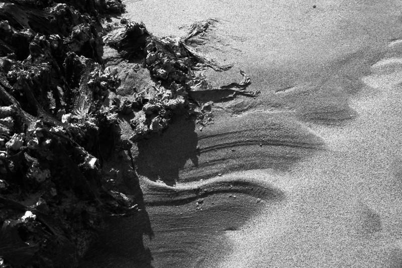 080705-035BW (Abstract; Barnacles, Seaweed, Sand).jpg