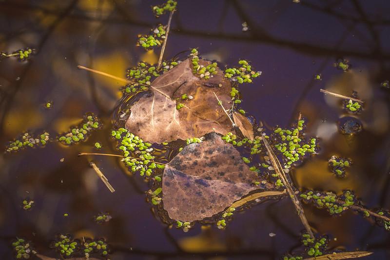 20151024-Fall Colors-30.jpg
