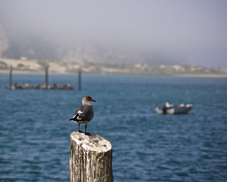 Perched bird overlooks the bay Morro Bay, CA ref: 29c2a3e6-149d-489a-bfc6-dc874eaa7751