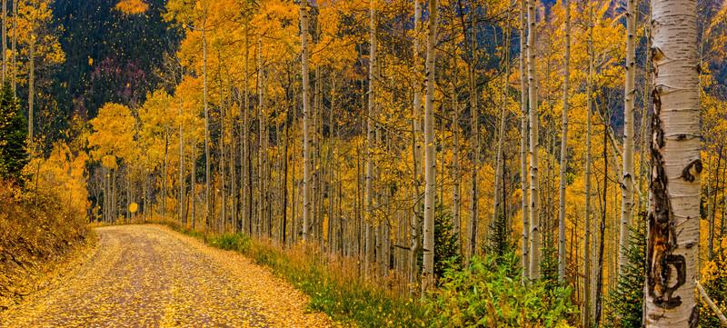 tmophoto_falling leaves.jpg