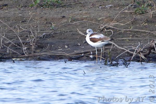2013-10-17 Riverlands Migratory Bird Sanctuary