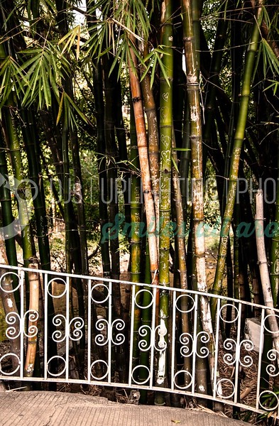 Bamboo-Balcony_batch_batch.jpg