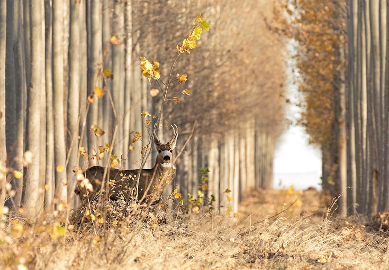 deer over ex 1.jpg
