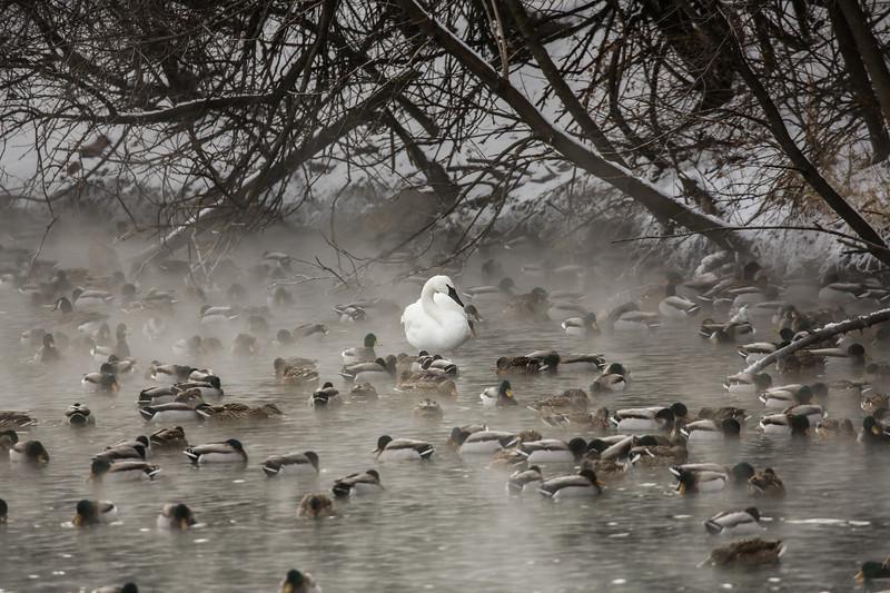 Among the flock