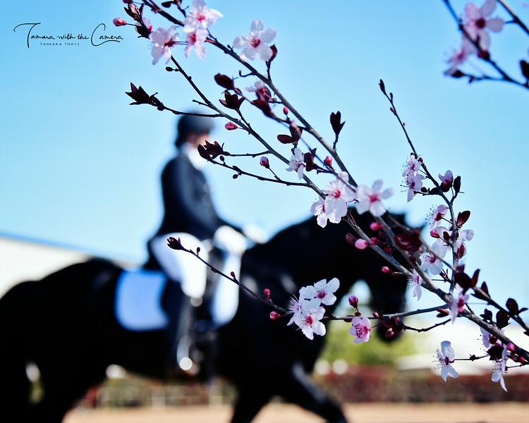 GSD 19 Blossoms 967.jpg