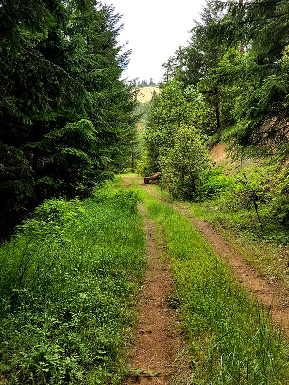 Sterling Mine Ditch Trail Oregon