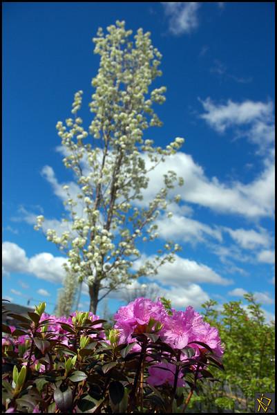 SpringDay4.jpg