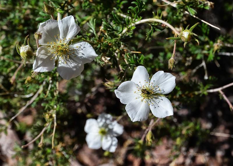 NEA_6899-7x5-Flowers.jpg