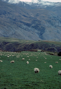 New Zealand 1984