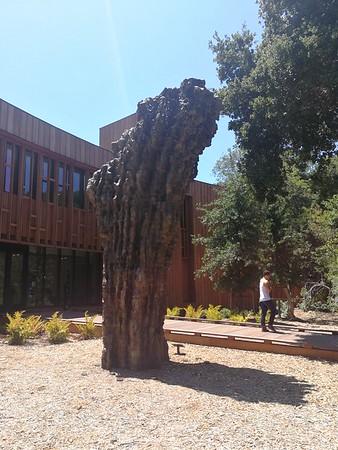 Stanford D. School
