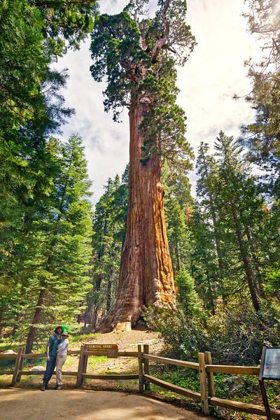 Sequoia -090616-040_HDR_edit.jpg