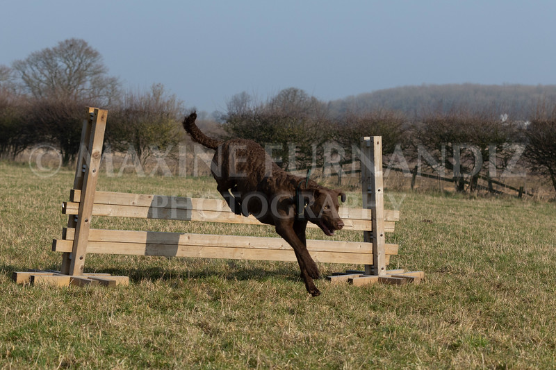 Dog Training Novice GD Feb2019-6022.jpg