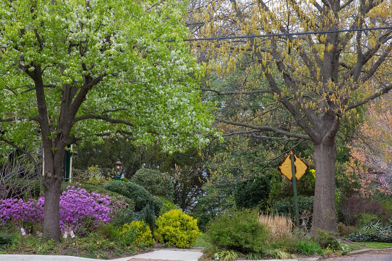 Suburban Spring - corner of W. Elm and N. Jefferson