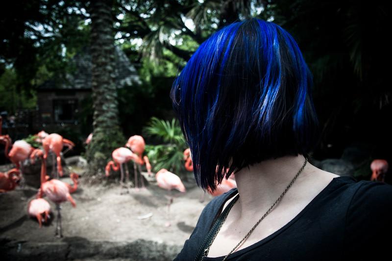 jenn and the flamingos.jpg