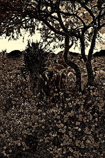 desert yellow 9-4-2010.jpg