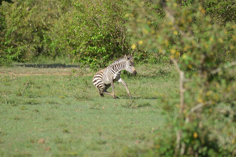 East Africa Safari 161.jpg