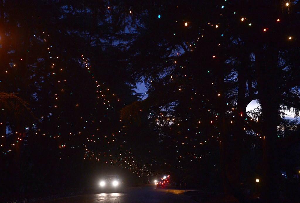 . Vehicles head up Christmas Tree Lane Thursday night, December 19, 2013 in Altadena on Santa Rosa Avenue where the residents light up their Deodar trees for the holidays. (Photo by Sarah Reingewirtz/Pasadena Star-News)