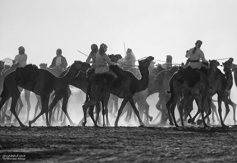IMGL8973-2-camels- B&W.jpg