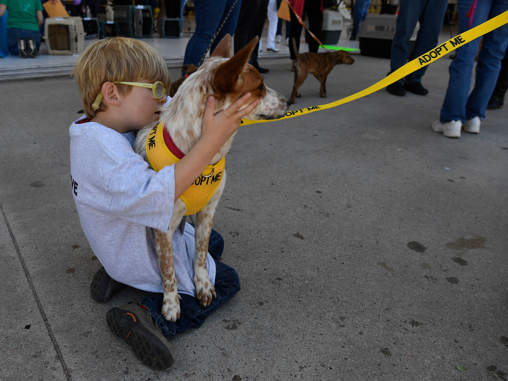 . Conner Grubb, 4, cuddles rescue dog �Lindsay,� an Australian cattle dog inside the TAC Air hanger May 04, 2016.  (Photo by Andy Cross/The Denver Post)
