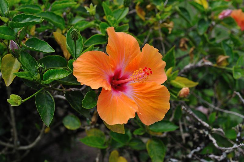 Kauai_579_85.jpg