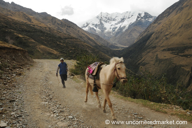 Keeping Up With His Horse - Salkantay Trek, Peru