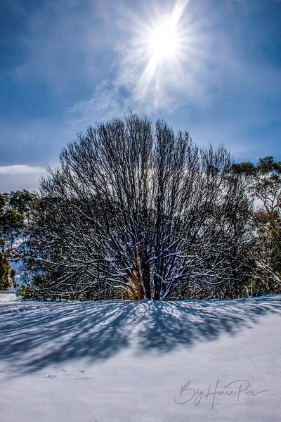 Snowy scene Aug 8,2019 -15_1.jpg