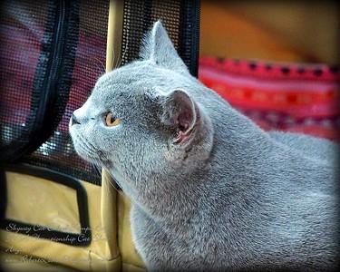 2015-08-15 ......Skyway Cat Club of Tampa Bay Fl