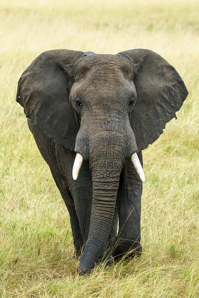 Kenya 2015-08194.jpg