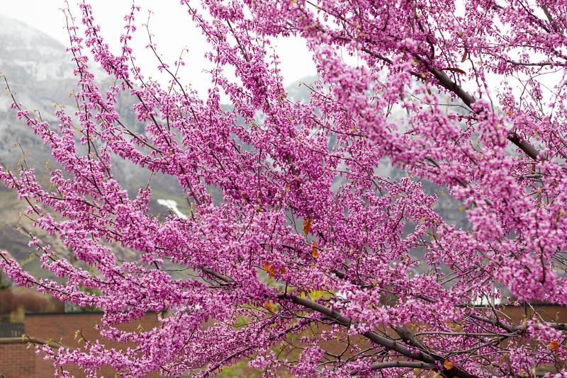 2016_04_14_BYU_Spring_Scenery_6610.jpg