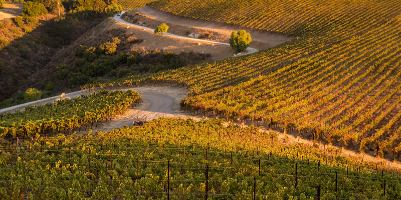 Law Estate Wines Harvest 2018 October 8, 2018 Aaron Meyers Photography