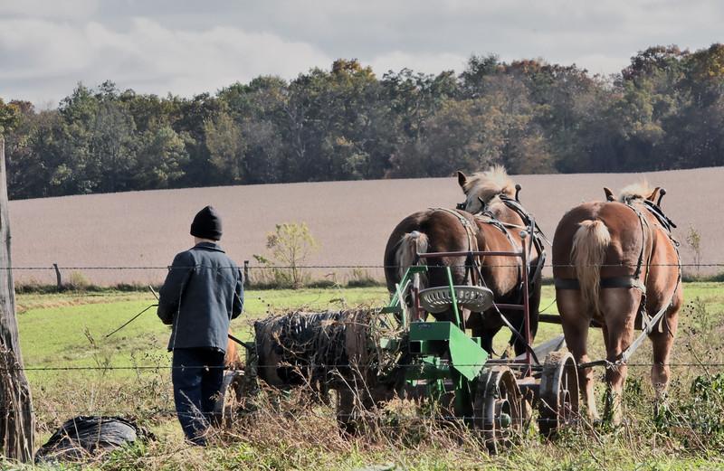 06 Field work Amish- Dalton Wi  .jpg