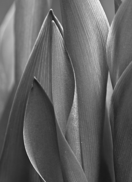 April 26 - Lily of the Valley study - OM 90mm macro