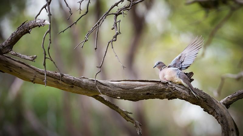 012019  birds  _2.JPG