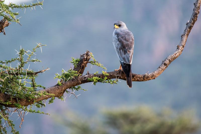 Samburu (31 of 70).jpg