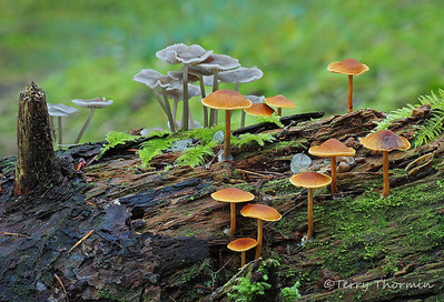 Fungi and Slime Molds