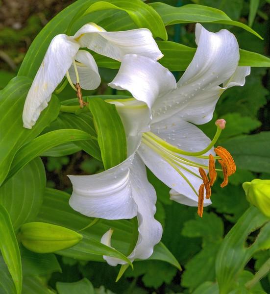 Garden 1, 195.jpg